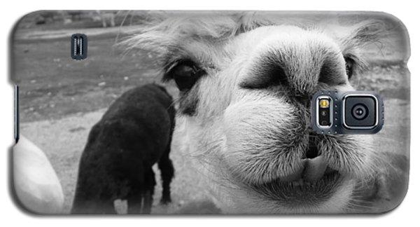Alpaca Face Galaxy S5 Case