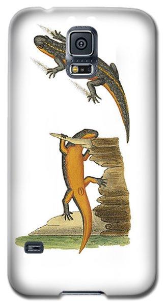 Alpine Newt Galaxy S5 Case