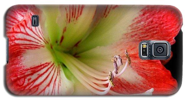 Amaryllis Galaxy S5 Case by Ron Davidson