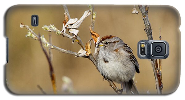 American Tree Sparrow Galaxy S5 Case