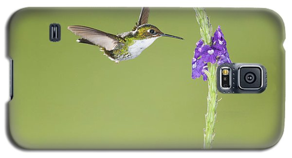 Galaxy S5 Case featuring the photograph Andean Emerald Hummingbird by Dan Suzio