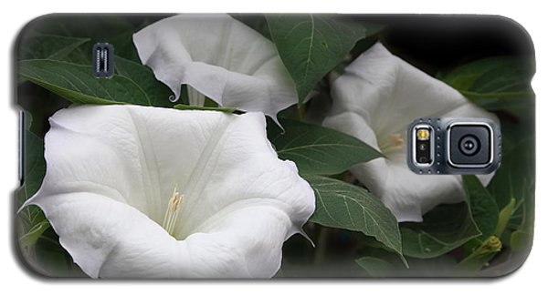Angels Trumpet Datura  Galaxy S5 Case by Angie Vogel