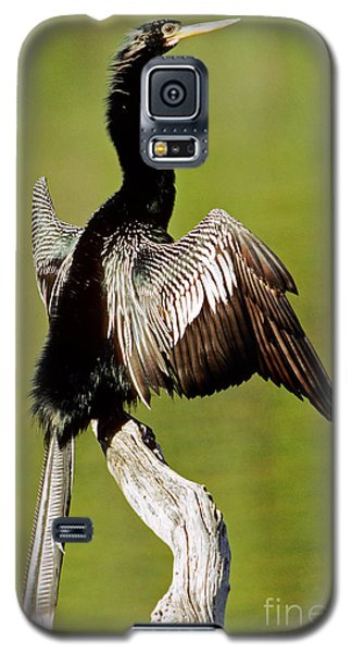 Anhinga Anhinga Anhinga Drying Plumage Galaxy S5 Case by Millard H. Sharp