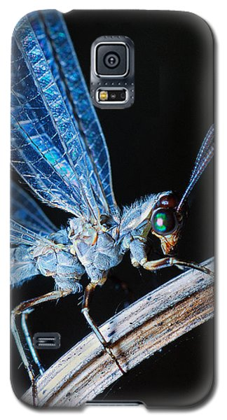 Antlion Galaxy S5 Case