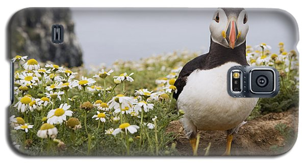 Atlantic Puffin In Breeding Plumage Galaxy S5 Case
