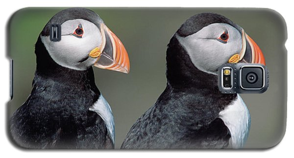 Atlantic Puffins In Breeding Colors Galaxy S5 Case by Yva Momatiuk and John Eastcott
