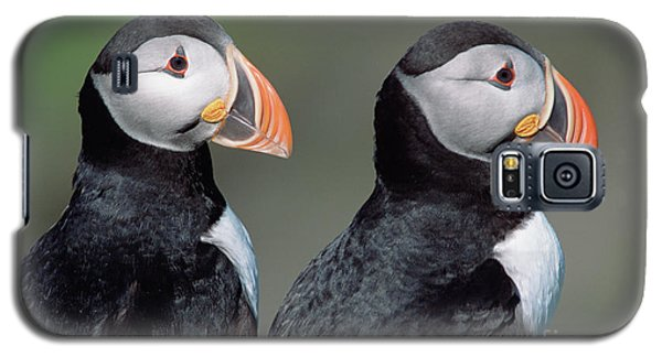 Atlantic Puffins In Breeding Colors Galaxy S5 Case