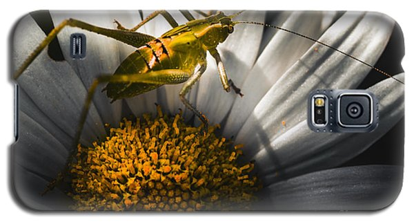 Australian Grasshopper On Flowers. Spring Concept Galaxy S5 Case by Jorgo Photography - Wall Art Gallery