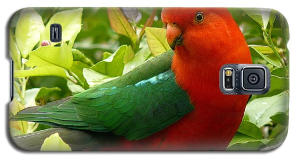 Galaxy S5 Case featuring the photograph Australian King Parrot by Margaret Stockdale