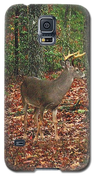 Autumn Buck Galaxy S5 Case