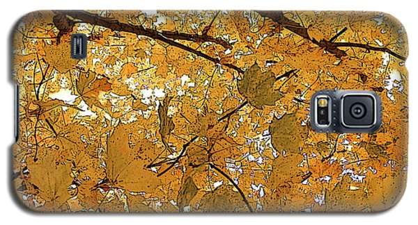 Autumn Canopy  Galaxy S5 Case by Margie Avellino