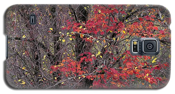 Galaxy S5 Case featuring the photograph Autumn's Palette by Alan L Graham