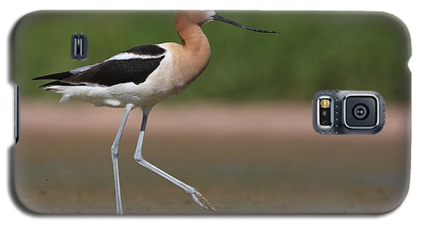 Galaxy S5 Case featuring the photograph Avocet Out For A Walk by Ruth Jolly