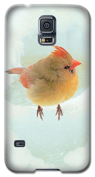 Baby Female Cardinal Galaxy S5 Case by Janette Boyd