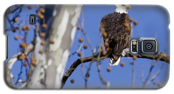 Galaxy S5 Case featuring the photograph Bald Eagle 2 by David Lester