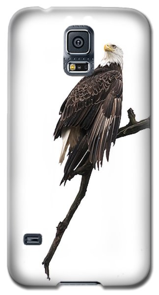Galaxy S5 Case featuring the photograph Bald Eagle 5 by David Lester