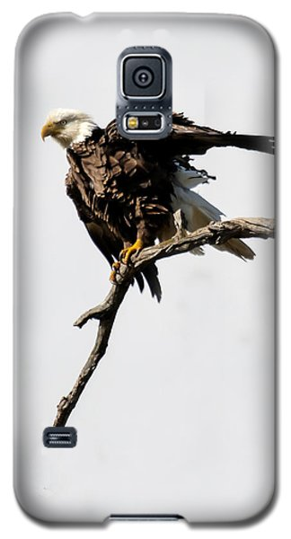 Galaxy S5 Case featuring the photograph Bald Eagle 8 by David Lester