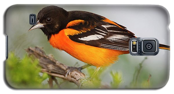 Oriole Galaxy S5 Case - Baltimore Oriole Foraging by Larry Ditto