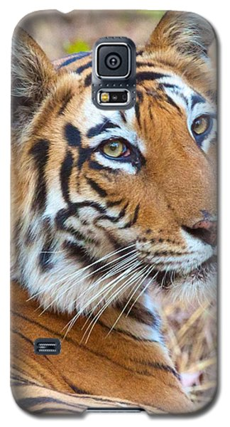 Bandhavgarh Tigeress Galaxy S5 Case