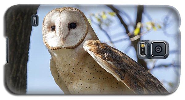 Barn Owl Galaxy S5 Case