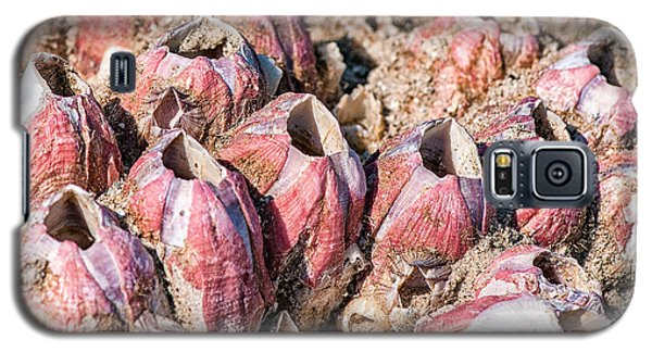 Barnacles Galaxy S5 Case