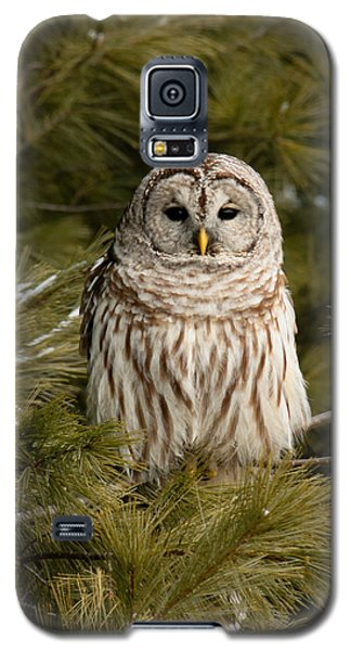 Barred Owl In A Pine Tree. Galaxy S5 Case
