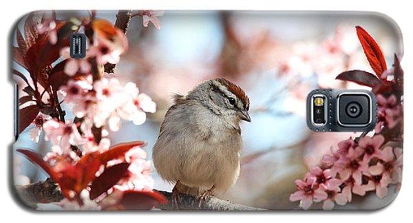 Beautiful Sparrow Galaxy S5 Case
