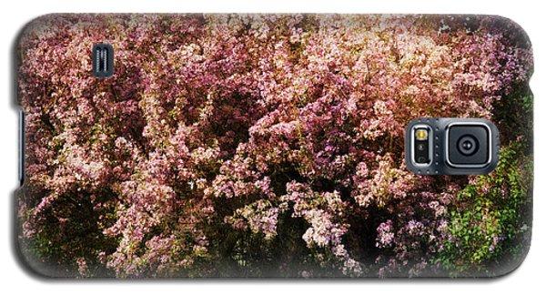 Beauty Galaxy S5 Case by Alana Ranney