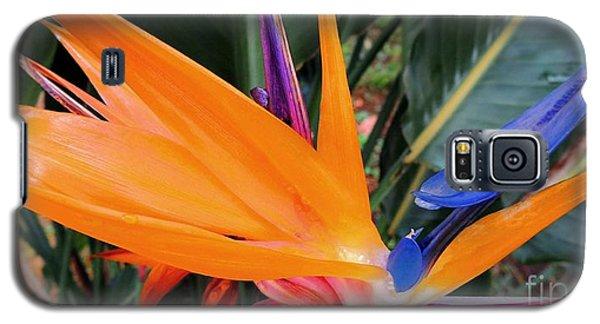 Bird Of Paradise Galaxy S5 Case by Kristine Merc