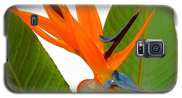 Galaxy S5 Case featuring the photograph Bird Of Paradise by Peg Urban