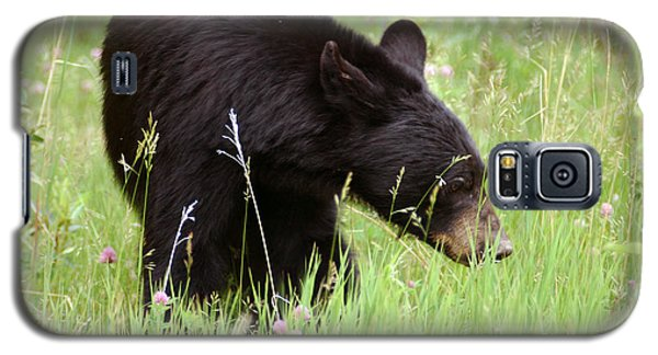 556p Black Bear Galaxy S5 Case