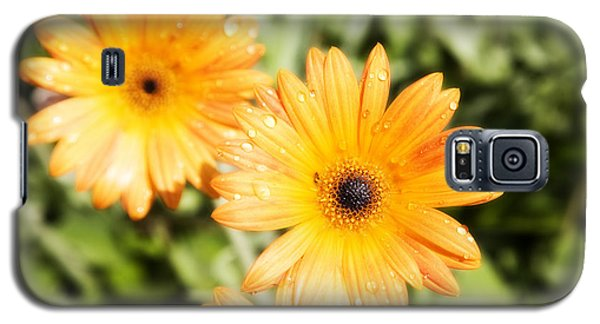 Galaxy S5 Case featuring the photograph Black Eyed Susan by Hugh Smith