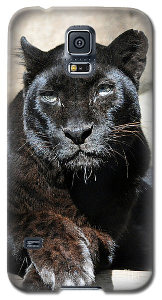 Black Leopard Galaxy S5 Case by Savannah Gibbs