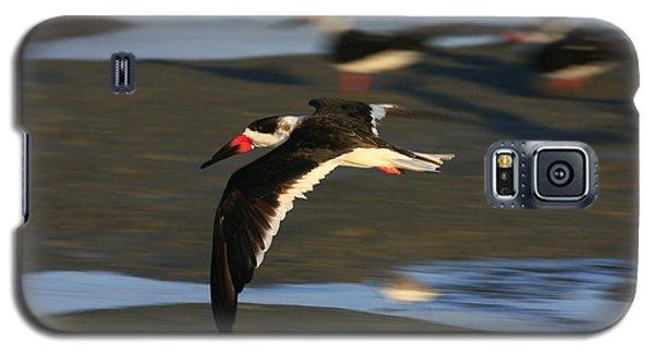 Black Skimmer Beach Galaxy S5 Case