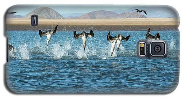 Blue-footed Boobies Feeding Galaxy S5 Case by Christopher Swann