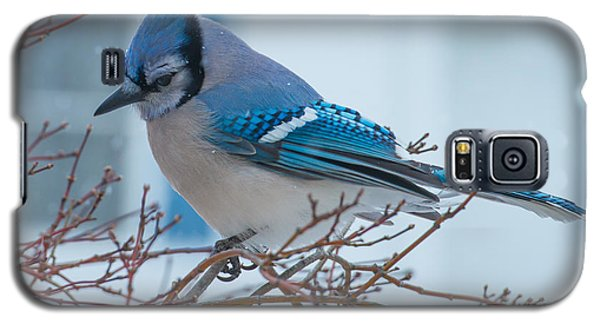 Blue Jay Galaxy S5 Case by Phil Abrams
