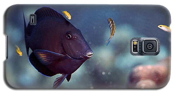 Blue Tang Galaxy S5 Case