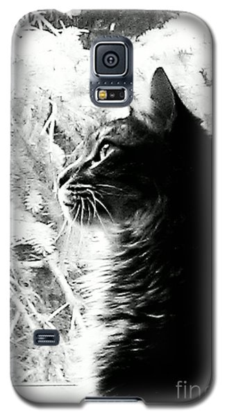 Galaxy S5 Case featuring the photograph Bo by Jacqueline McReynolds