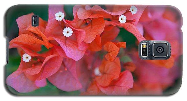 Bougainvillea Galaxy S5 Case by Roselynne Broussard
