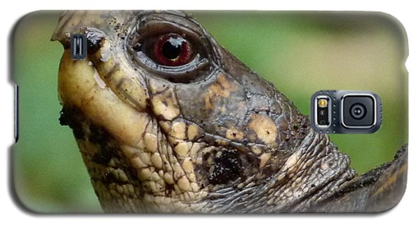 Box Turtle Galaxy S5 Case by Jane Ford