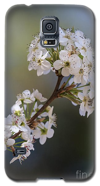 Bradford Blossoms II Galaxy S5 Case