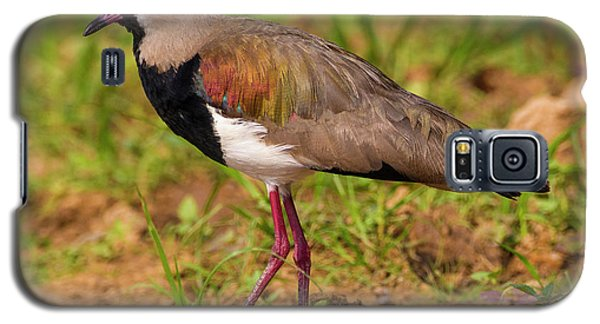 Brazil A Southern Lapwing (vanellus Galaxy S5 Case