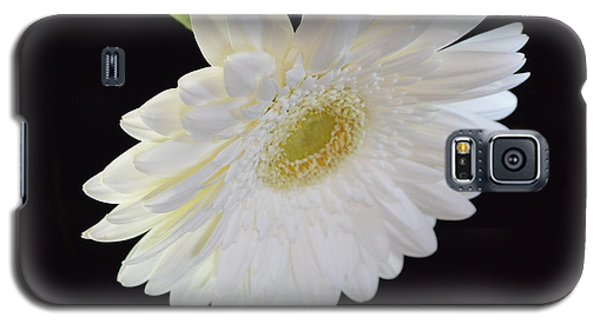 Galaxy S5 Case featuring the photograph Bright White Gerber Daisy # 2 by Jeannie Rhode