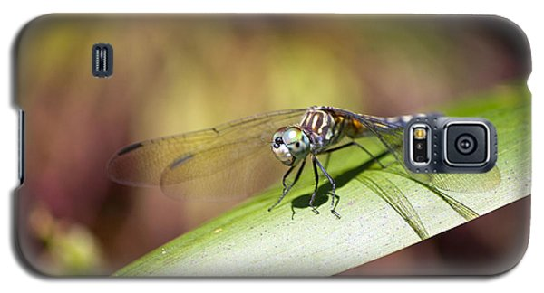 Brown Dragonfly Galaxy S5 Case