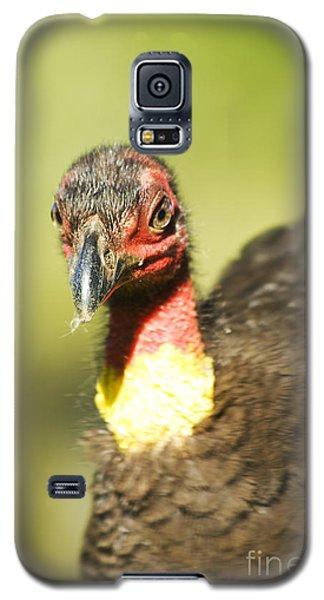Brush Scrub Turkey Galaxy S5 Case by Jorgo Photography - Wall Art Gallery