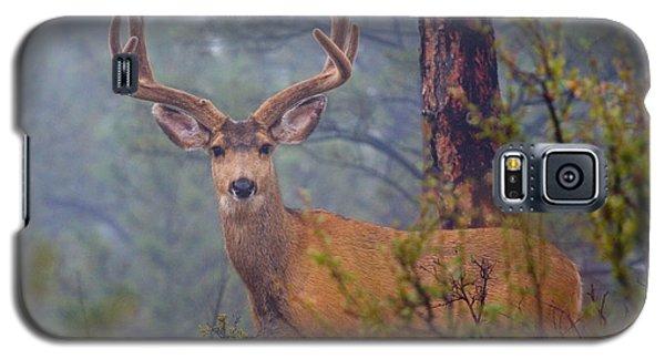 Buck Deer In A Mystical Foggy Forest Scene Galaxy S5 Case