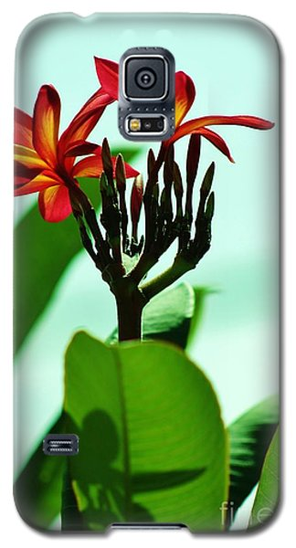 Galaxy S5 Case featuring the photograph Buds And Blossoms by Craig Wood