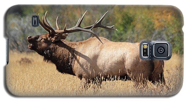 Bugling Bull Galaxy S5 Case