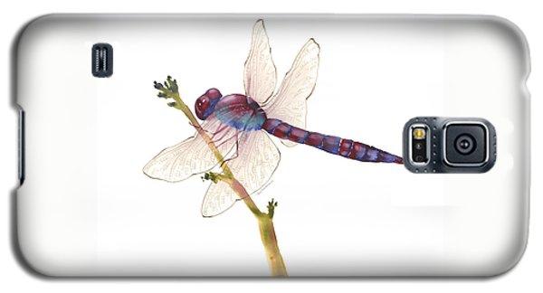 Burgundy Dragonfly  Galaxy S5 Case