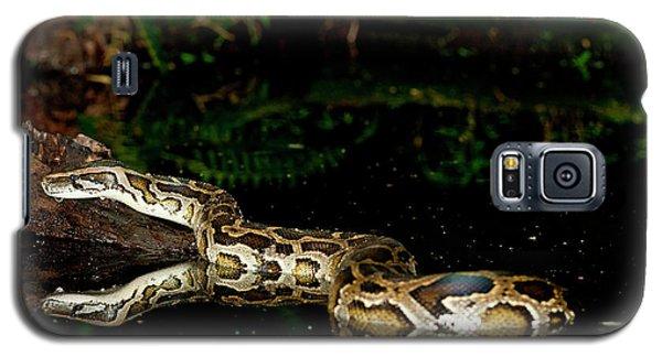 Burmese Python, Python Molurus Galaxy S5 Case
